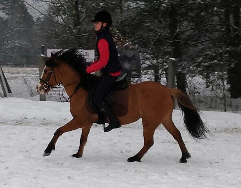 Konie Zuzia